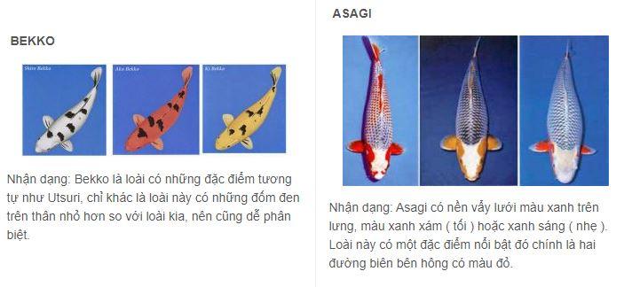 Cá Koi 5